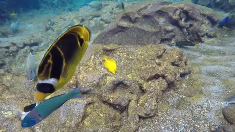 Amazing Snorkeling adventure in the Aulani Disney Resort in Hawaii