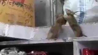 Mouse fight in grocery store