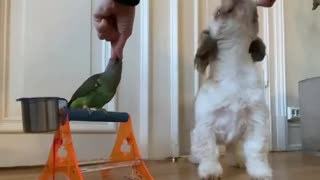 Parrot and dog performing synchronized tricks together