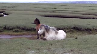 Pony and foal heroically rescued - Video