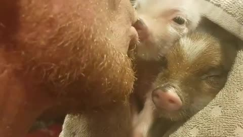 Man repeatedly kisses baby mini pigs