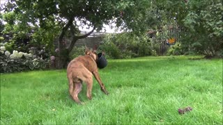 Puppy is playing with a plant pot - Video