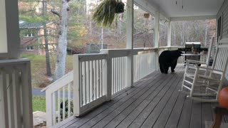 A Quick Drop-in by the Bear Family - Video