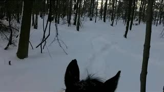 Winter Trail Ride with Morningstar