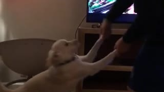 Dancing salsa with dog - Video