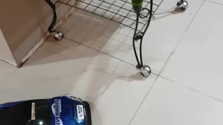 Bird Rides RC Car - Video