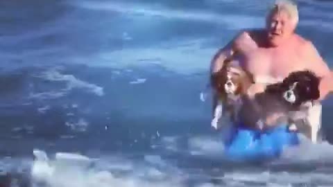 Man carries two dogs out into the ocean, dogs swim back to shore