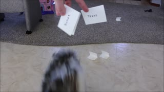 Puppy makes her March Madness bracket picks - Video