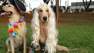 Puppy Dog Dress-Up - Video