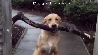 Is That Dog So Stupid Or Not