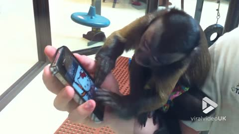 Monkey tries to figure out iPhone