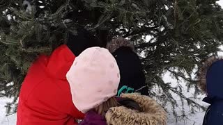 Christmas Tree Topples Onto Toddler - Video