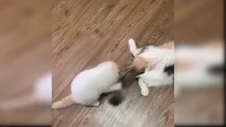 Baby Cats Cute and Funny Cat Videos Compilation #21 Aww Animals