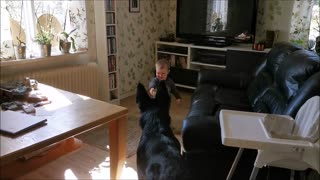 Baby plays adorable game of tag with German Shepherd