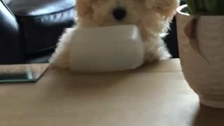 Dog flips over tupperware