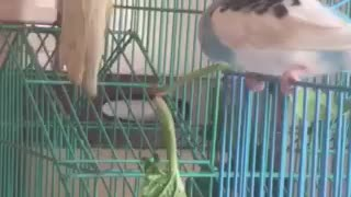Parrot Eat Fanny - Video