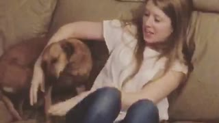 Brown dog jumping on sofa toward owner  - Video