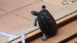 All Turtle Wants is a Cold One