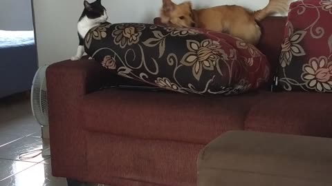 Cat and Dog Become Best Friends