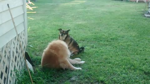 Nasty Dogs - Sad Two Male Dogs Having Oral