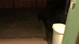 When a Bear Just Wants to Come Inside - Video