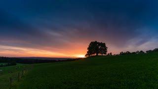 Sunset Landscape Idyll Cows Pasture Graze Tree