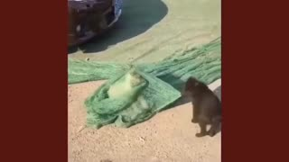 Little dog helps his brother get out of