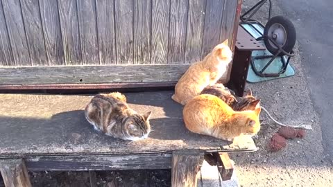 Baking straycats on the bench
