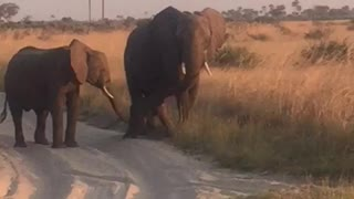 Baby Elephant in the Wild Nose-Dives - Video