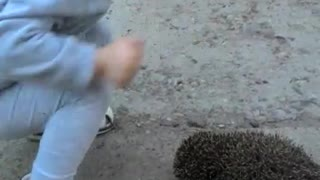Kid playing with a hedgehog
