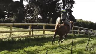 Amazing Compilation Of Horse Bloopers! - Video