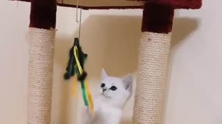 Cute cat is very playful