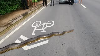 Anaconda Crossing!
