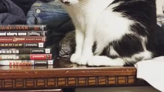 Cat repeatedly knocks coin right off the table - Video