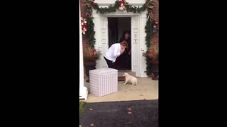 Mom Gets Adorable Golden Retriever Puppy Surprise - Video