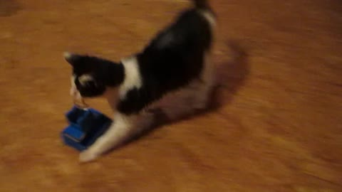 Cat drags toy across the room