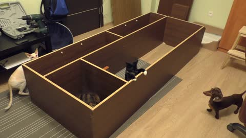Overturned cabinet comically becomes playpen for pets