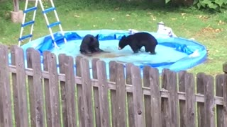 Bear-ly Swimming - Video