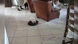 Adventurous Little Dog Goes For A Ride On A Roomba