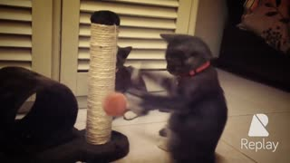 Kitten Boxes Toy  - Video