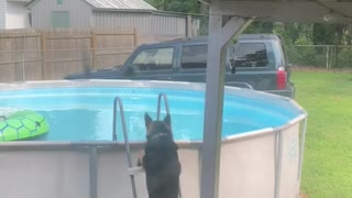 German Shepherd Learned How to Get into Pool