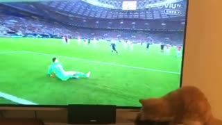 Cat proves to be better goalie than professional player