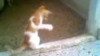 A cat is trying to catch something  - Video