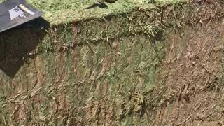 Hay Bale With a Slithering Surprise