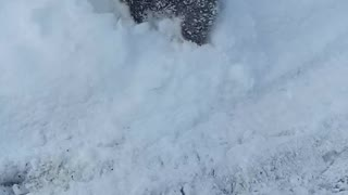 Puppy Loves Snow - Video