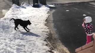 Little girl blowing bubbles sends dog into zommie fit