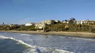 Seagulls at San Clemente Pier - Video