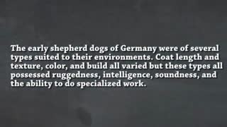 A history of the German Shepherd