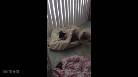 Dog Wants Her Bed Back