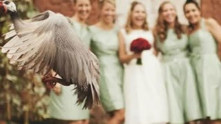 Compilation Of Hilarious Wedding Photobombs